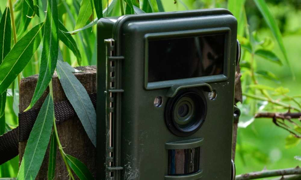 Best Wireless Trail Camera of 2018 - Complete Reviews With Comparison