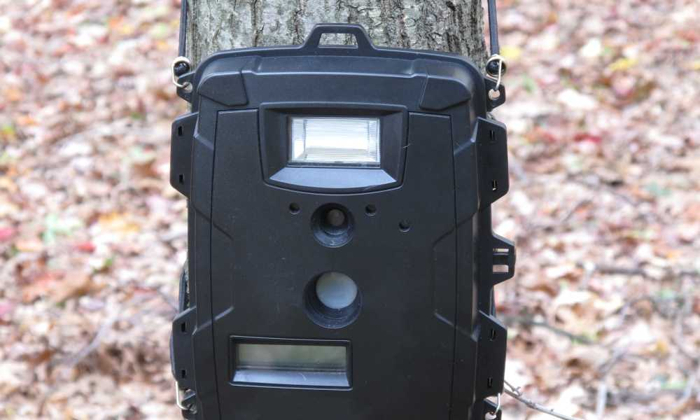 Rexing Woodlens H1 Trail Camera Review