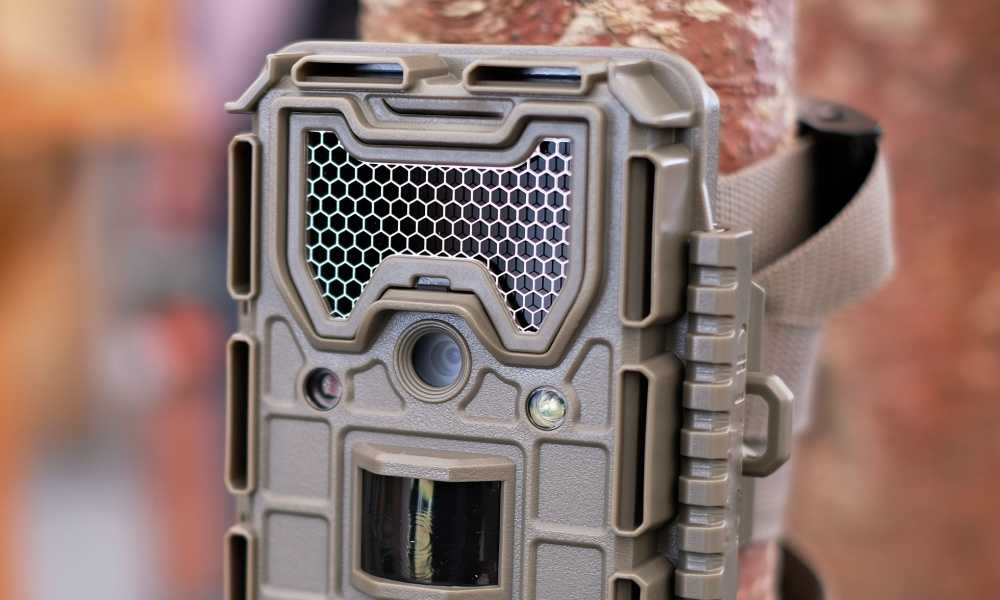 Trail Camera Black Flash vs Infrared