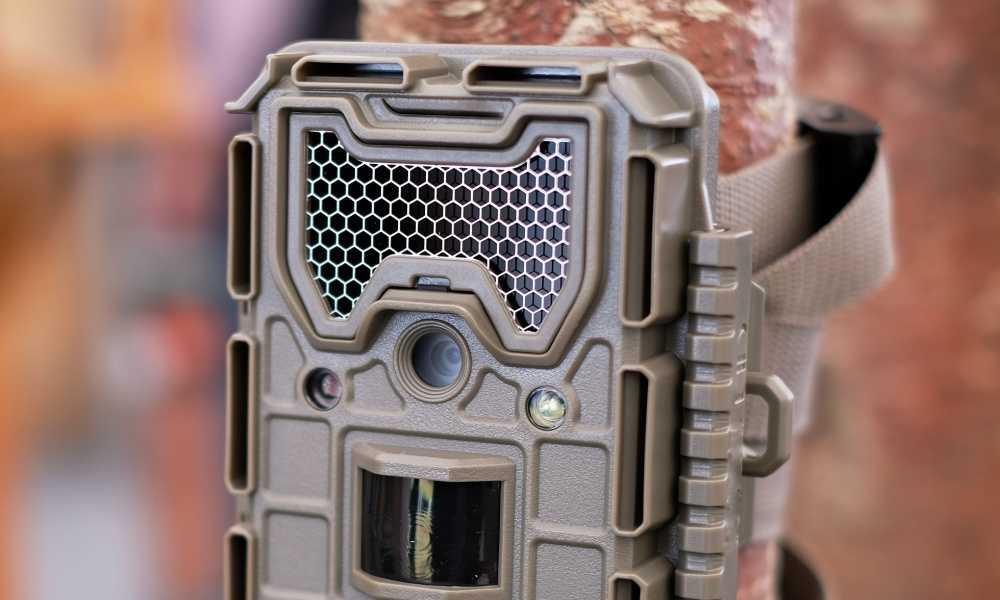 Trail Camera Black Flash vs Infrared