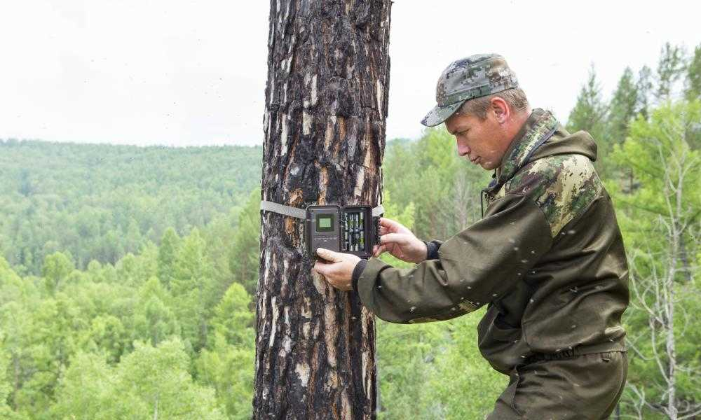 Trail Camera Mounting Height - What Is the Right Height