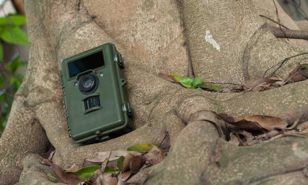 Be discreet with the placement of your trail camera