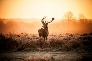 Best Way to Gut a Deer: 11 Steps for Success