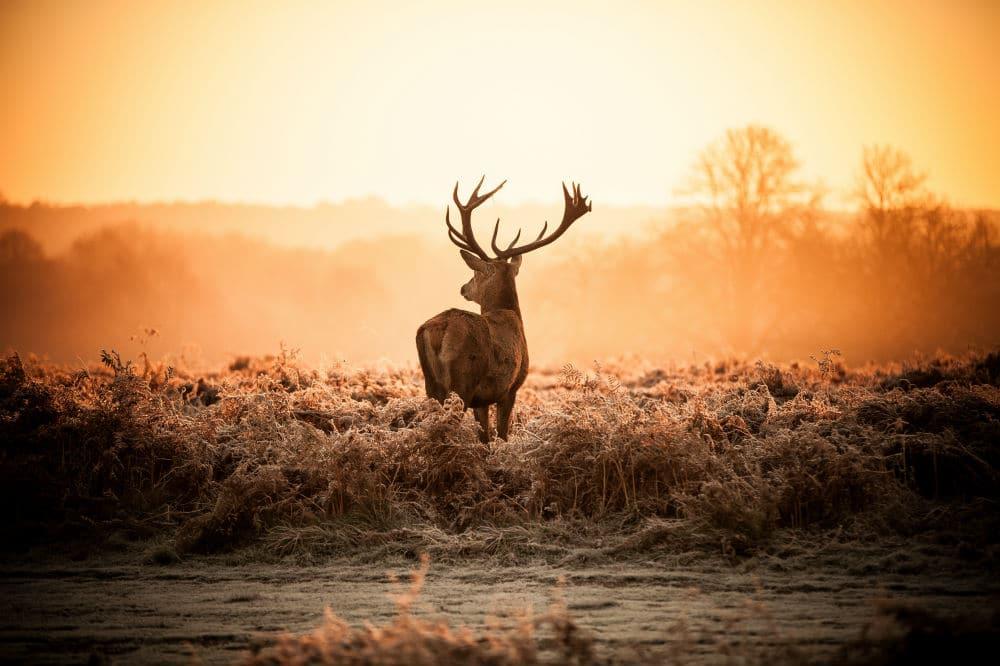 Best Way to Gut a Deer