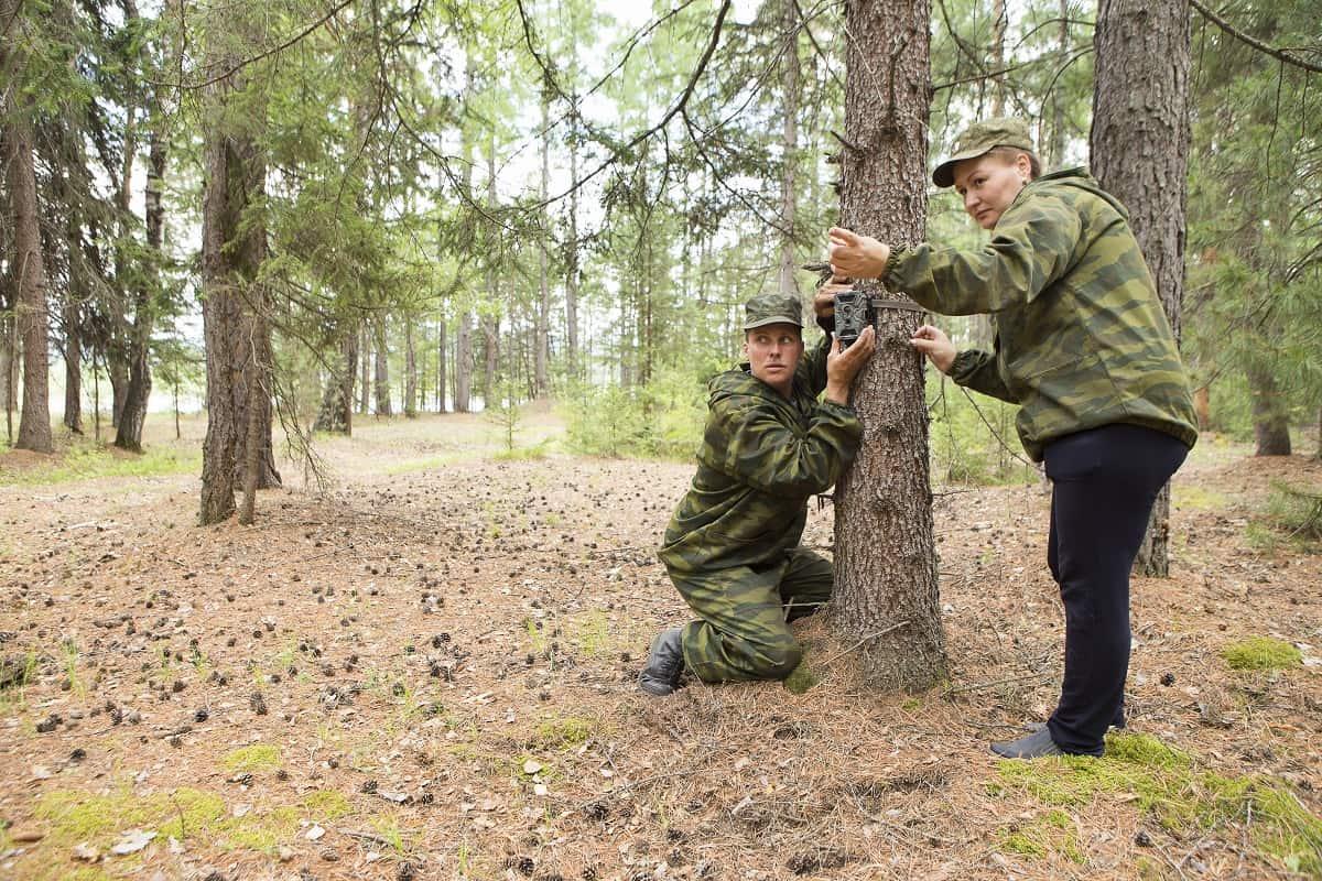Best Cellular Trail Camera - wildlifechase.com