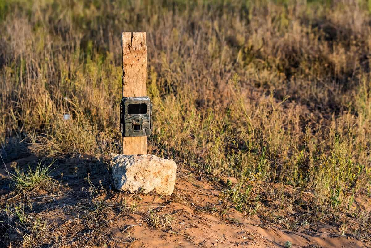 How to Find Trail Cameras in The Woods - wildlifechase.com